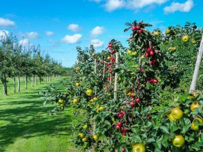 Culturas frutícolas perenes  – UFCD 7587 | 50h