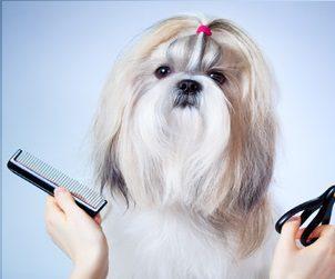Estética Canina | 35h | E-learning