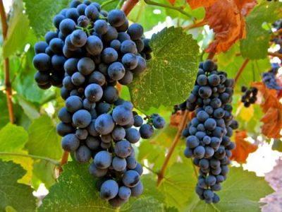 Vinho – UFCD 4204 | 50h | E-Learning