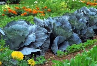 Culturas hortícolas e florícolas   – UFCD 7588 | 50h