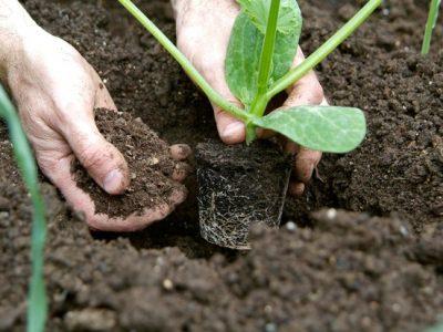 Obtenção de plantas, instalação de culturas e manutenção – UFCD 7585 | 50h